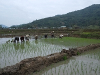 3 Days from Hoi An to Quang Ngai - Highland tour 1